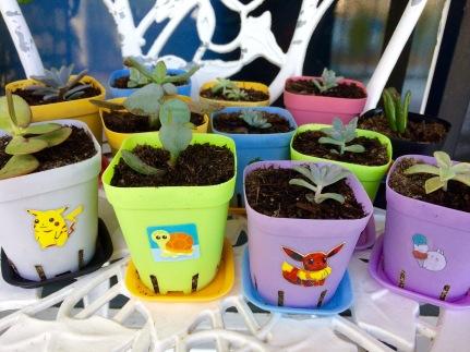 succulents-zics.jpg